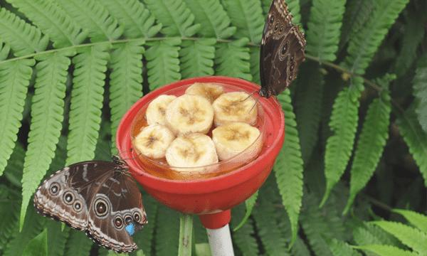 serre-papillons-orleans