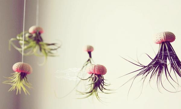 plantes-deco-marine