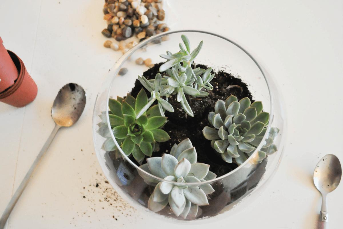 terrarium-plantes-fete-mere
