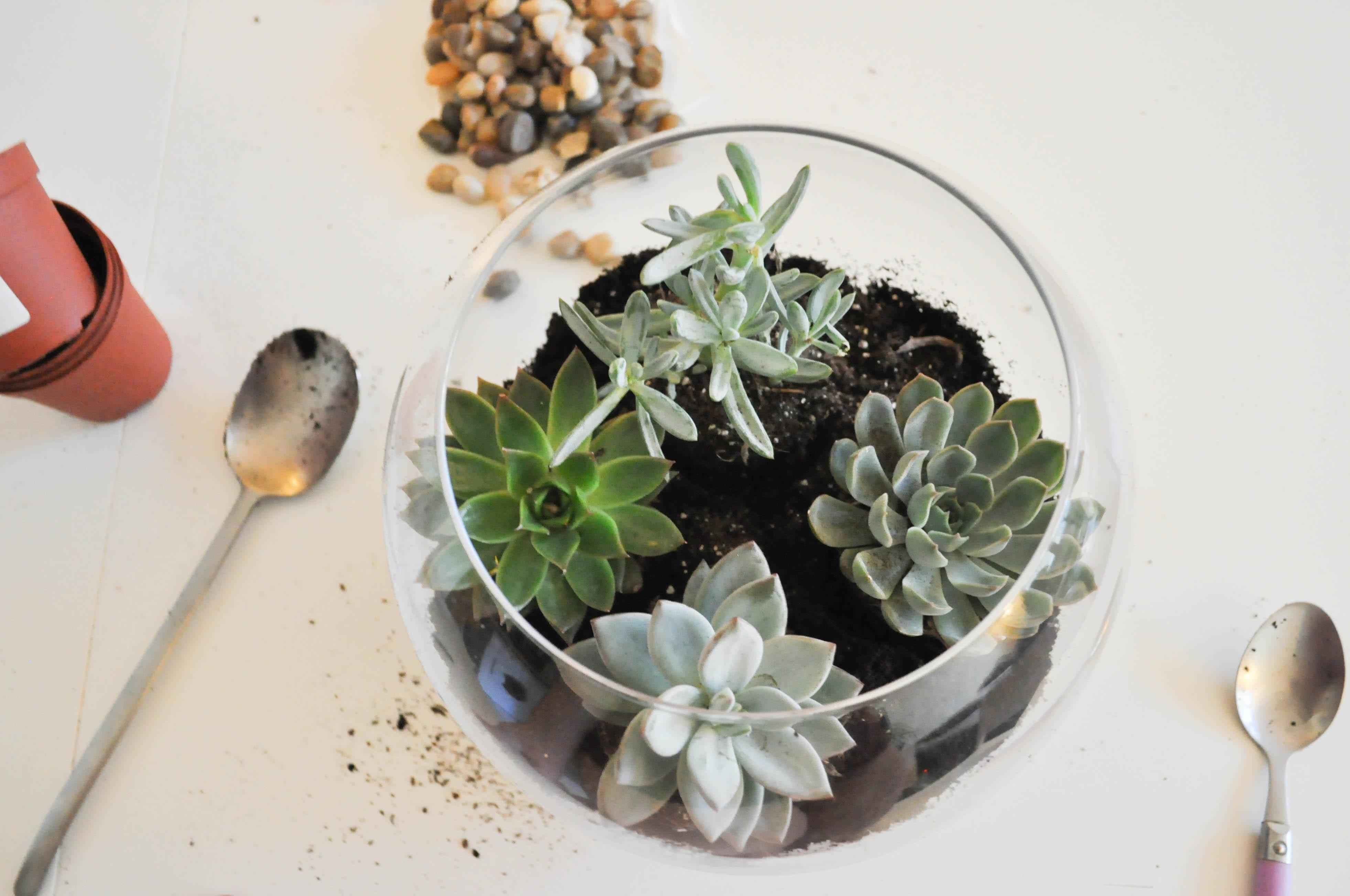 Comment Faire Un Terrarium Plante Grasse diy : faire son terrarium de plantes