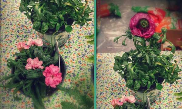 fleurs-hiver