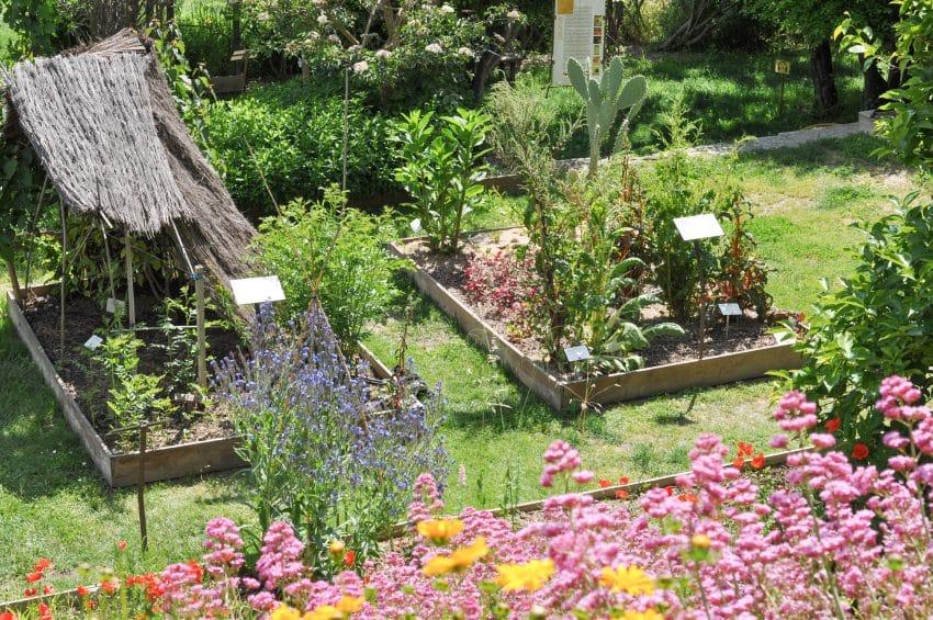 lauris-jardin-plantes-tinctoriales